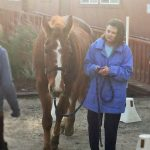 Jennifer in a blue raincoat holding the reins of a large brown horse