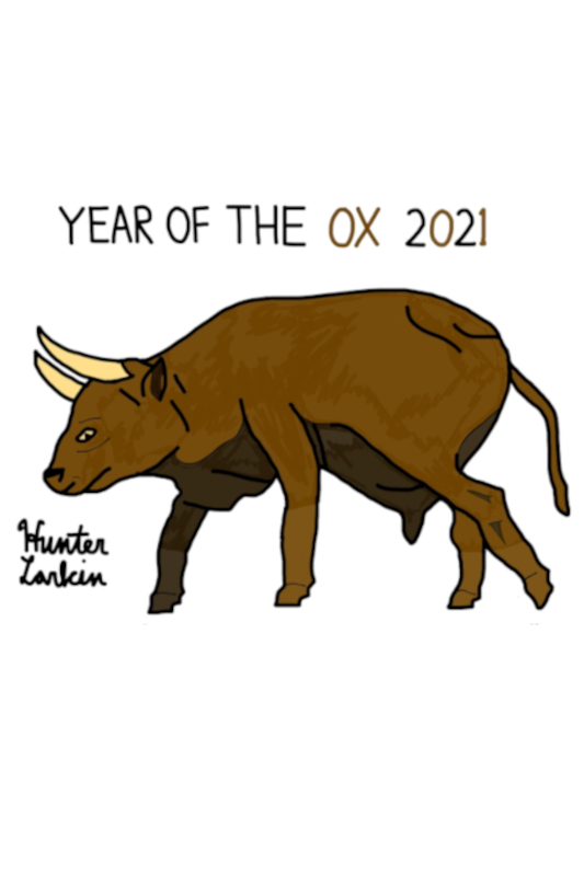Hunter's artwork of an ox for Chinese New Year